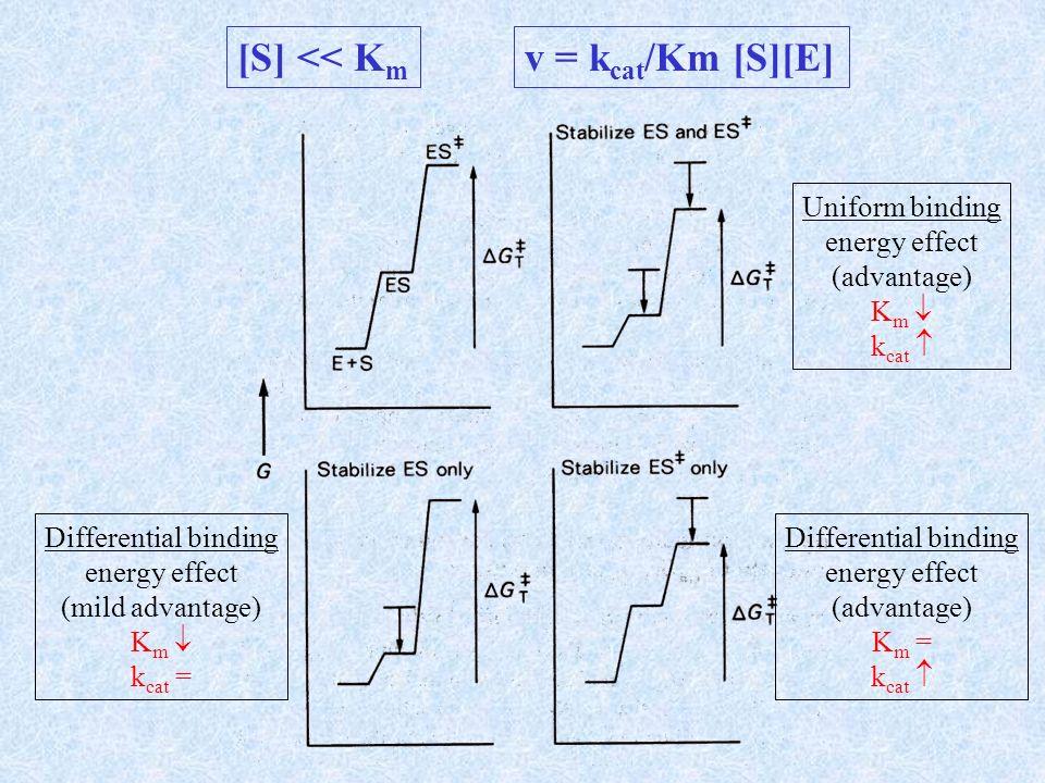 [S] << Km v = kcat/Km [S][E] Uniform binding energy effect
